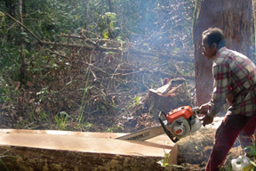 Pengaruh Kegiatan Manusia terhadap Keseimbangan Ekosistem