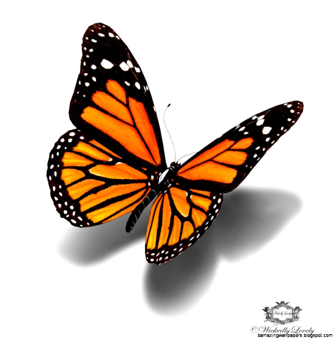 Popular items for orange butterfly on Etsy