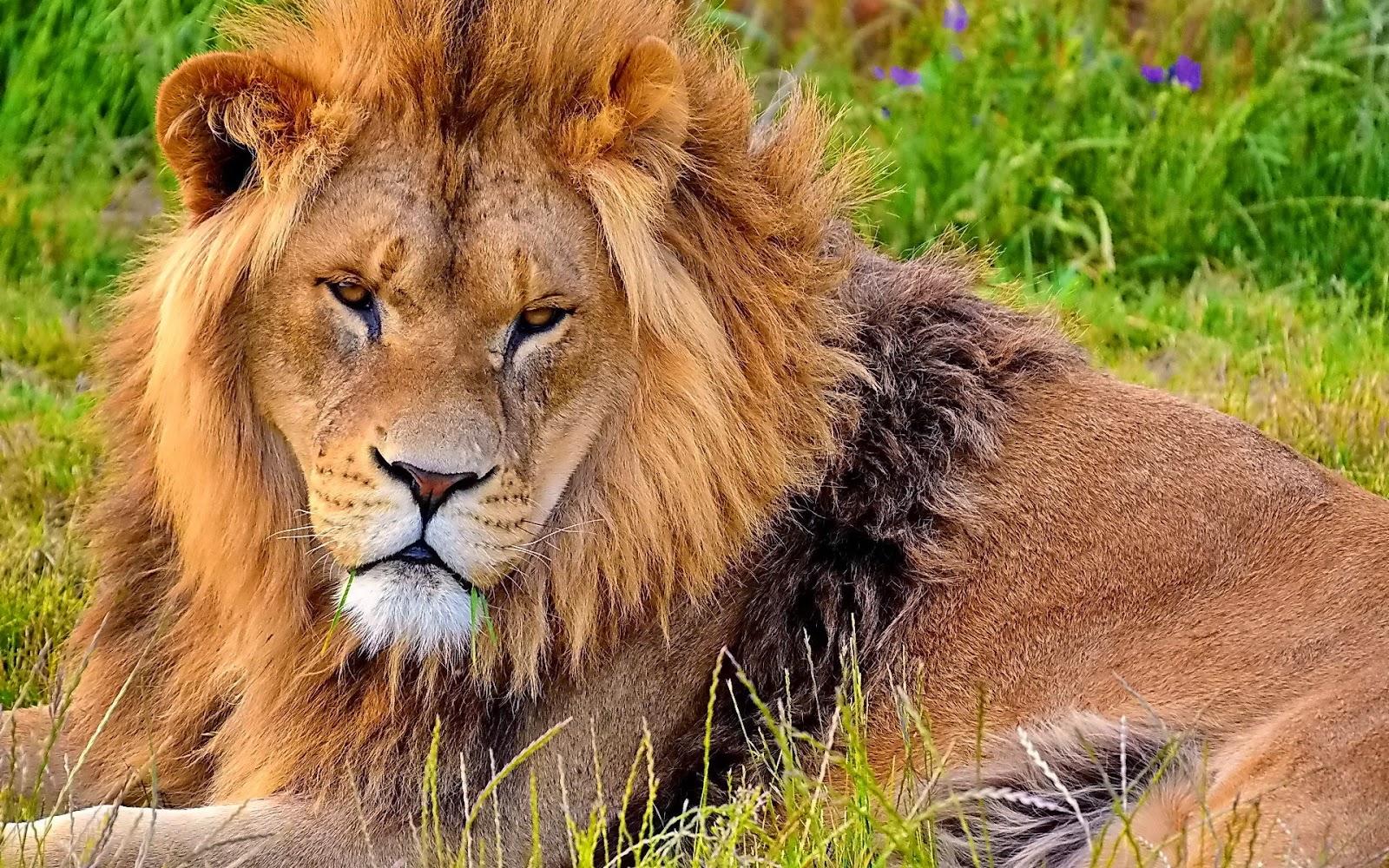 Movie Lion Free Download