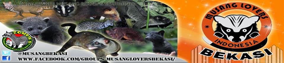 Musang Bekasi