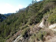 El camí de tornada passa enlairat, uns metres, per la vessant dreta de la riera de Sant Bartomeu