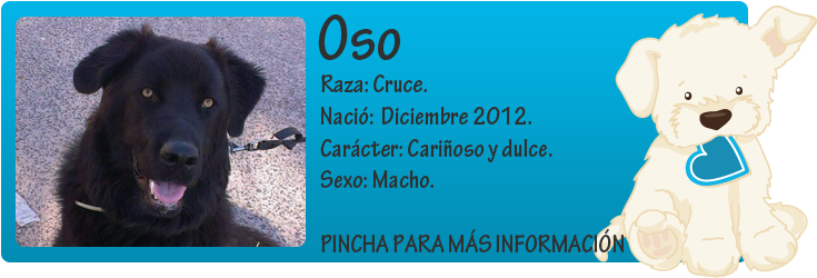 http://mirada-animal-toledo.blogspot.com.es/2013/10/oso-cachorron-en-adopcion.html