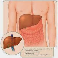 http://agenjellygamatgoldgmagelang.blogspot.com/2013/10/obat-liver-alami.html