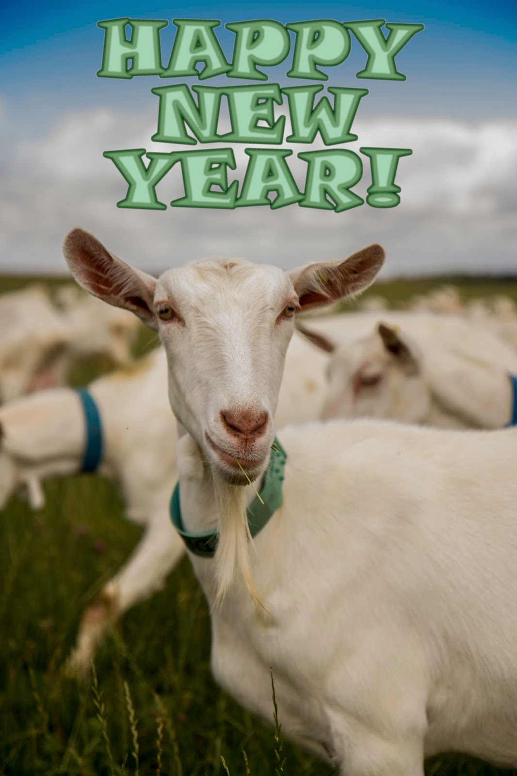 hope that youre all having a good one heres a happy new year goat
