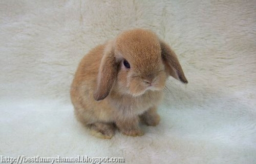 Sweet nice bunny.