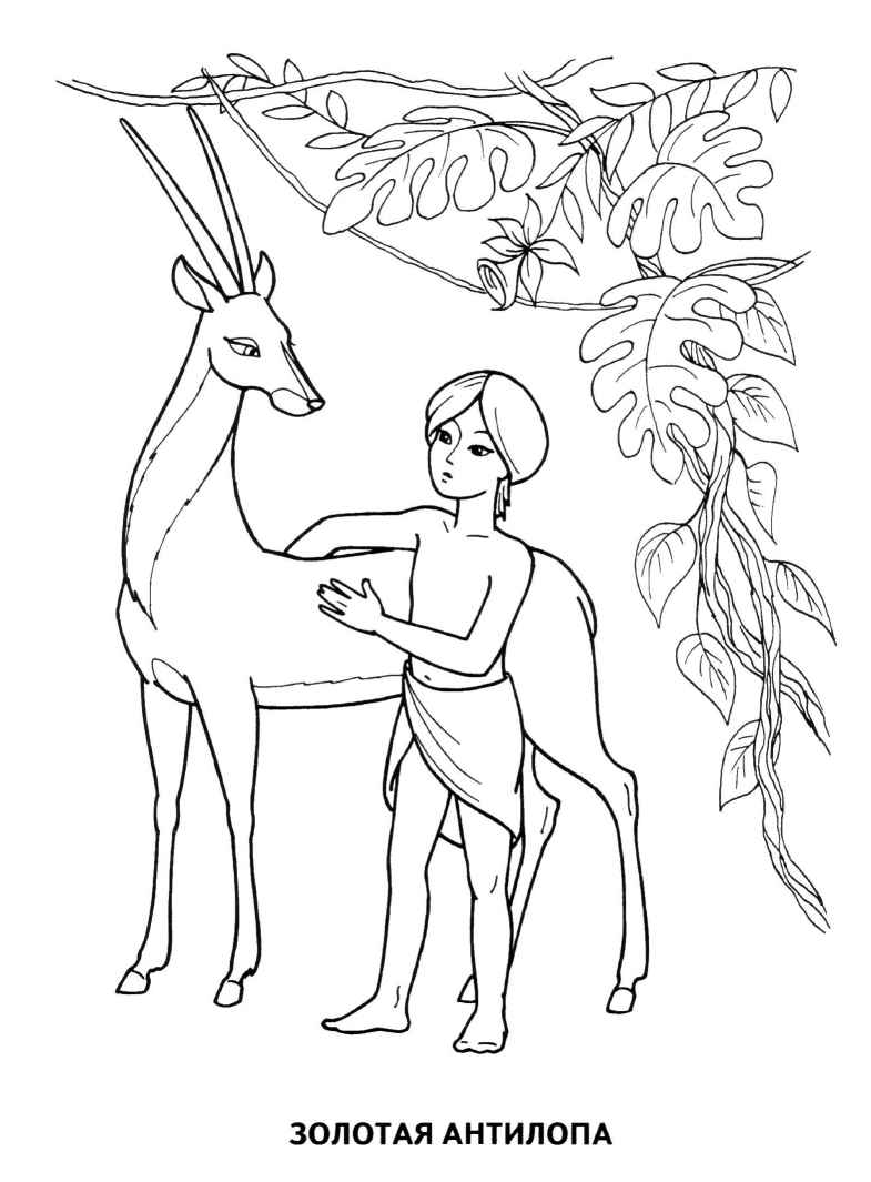Раскраска антилопа золотая
