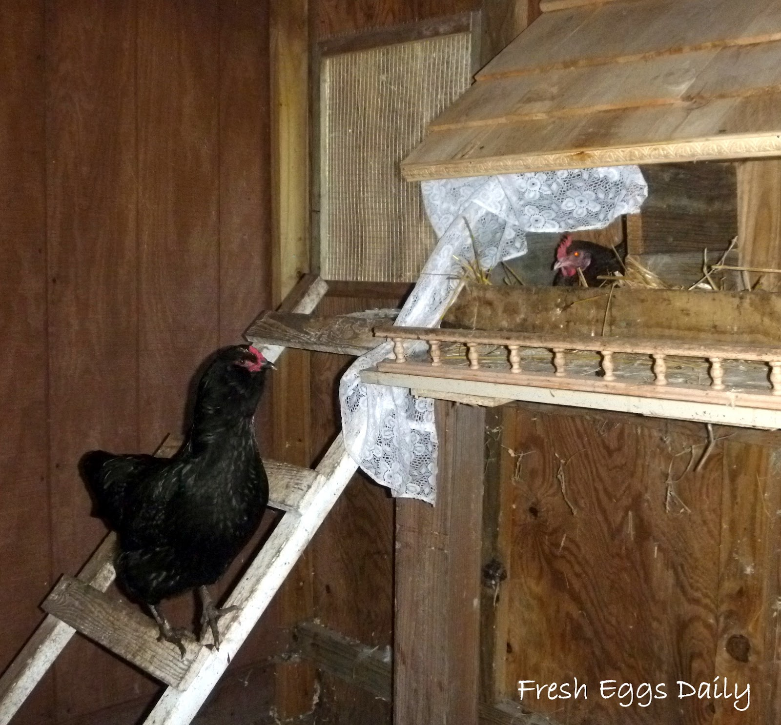 the chicken coop case Free chicken coop plans in every design and size there are three different styles of pvc chicken coops available here including in this case, a chicken coop.