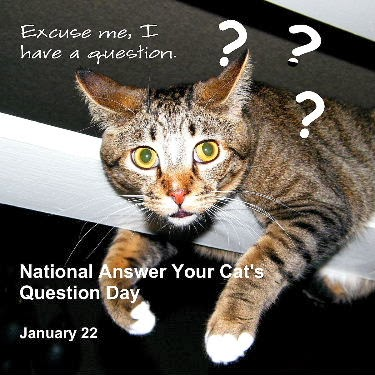 National Answer Your Cat's Question Day