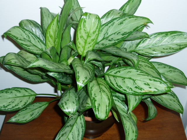 Attractive House Plants 2015