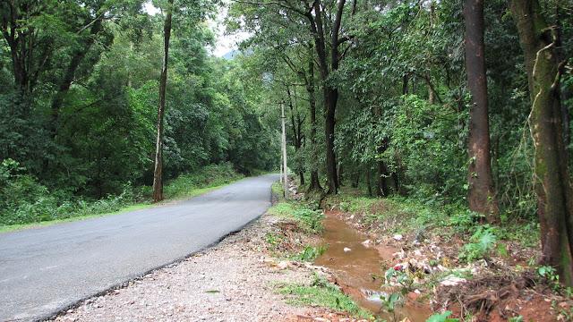 Thick jungle Roads