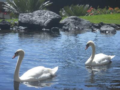 Kauai swan grand hyatt poipu resort and spa