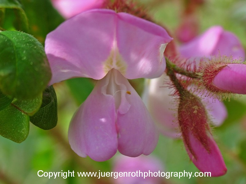 http://juergenroth.photoshelter.com/gallery/Flowers/G0000DCr8YHs9TZ4/