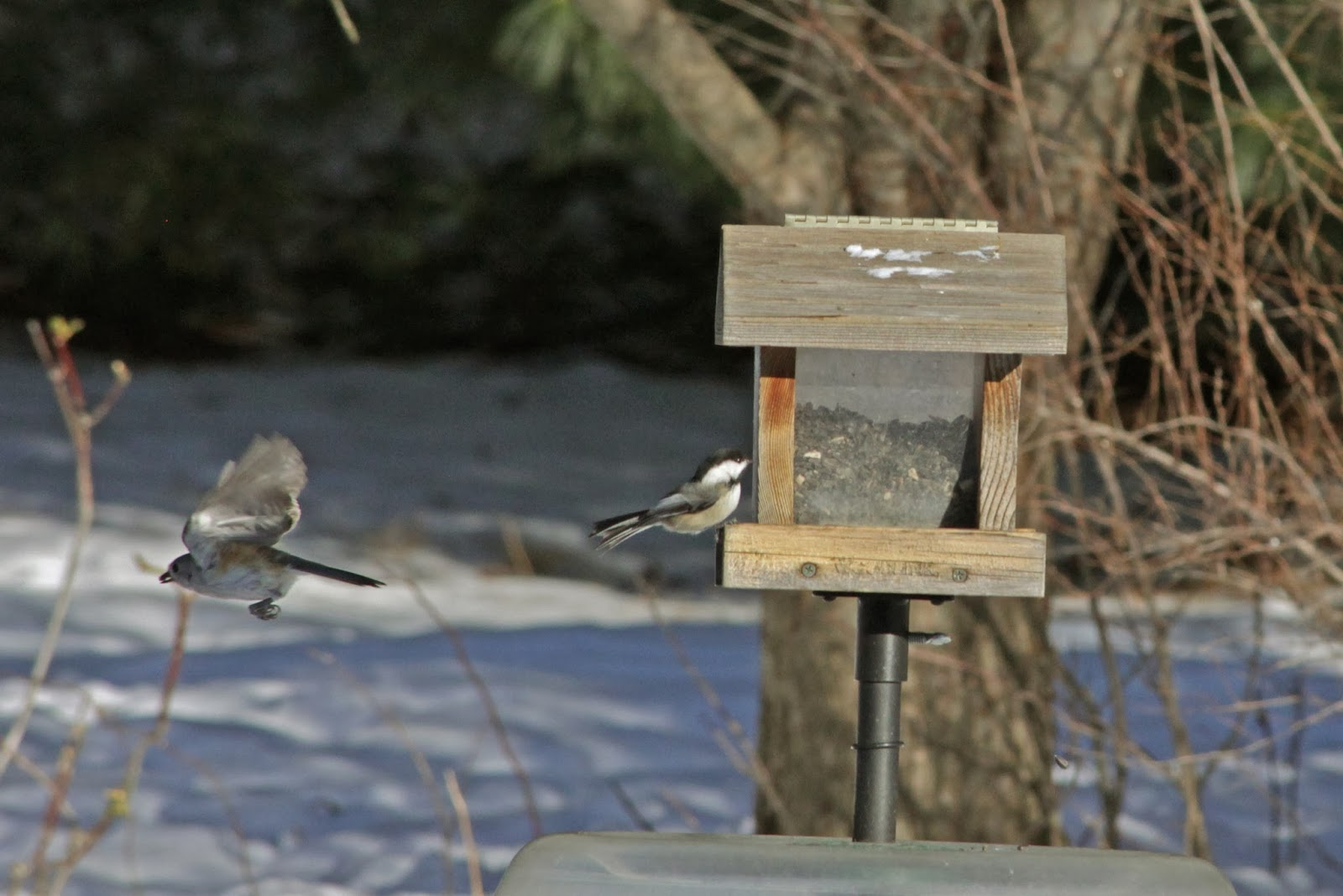 flying from feeder