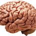 Jual otak di Tokobagus.com