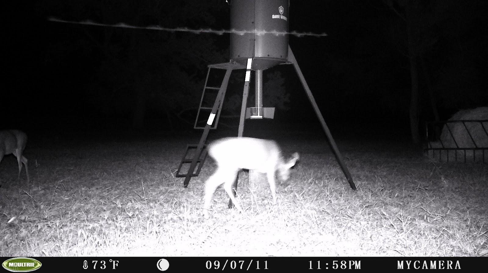 Wild Game Camera Catches Alien Rod In Night Photo, Oct 10, 2011 UFO ...