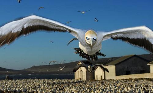 2011 world press photo contest 1er premio naturaleza
