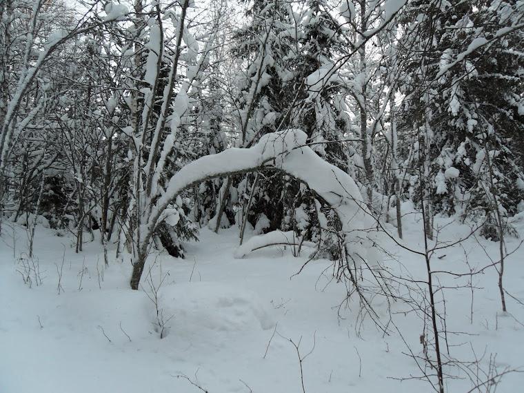 Talven taikaa