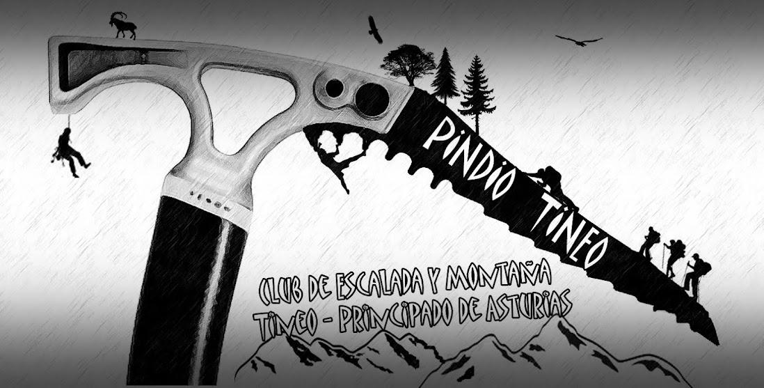 PINDIO TINEO