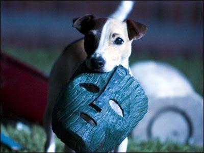 http://3.bp.blogspot.com/-CwH8UjKE4uY/TzjNN8AZwjI/AAAAAAAAD0o/eVJIxSyFUY4/s400/dogmask.jpg