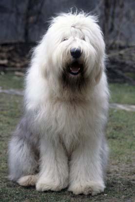 Annie Maisies Doggy Blog