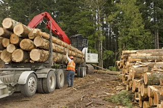 Worker securing logs to a trailer