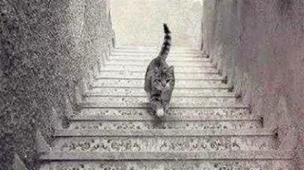 Kedi iniyor mu çıkıyor mu?