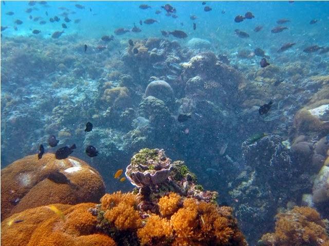 Sumur Ikan Taka Bonerate