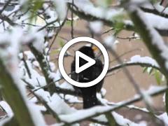 ΒΙΝΤΕΟ: Ηπειρώτικα κάλαντα