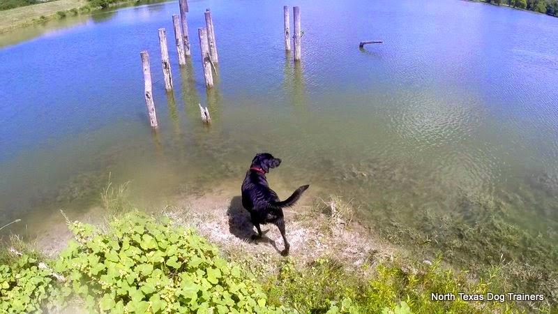 north texas duck hunts|north texas duck hunting