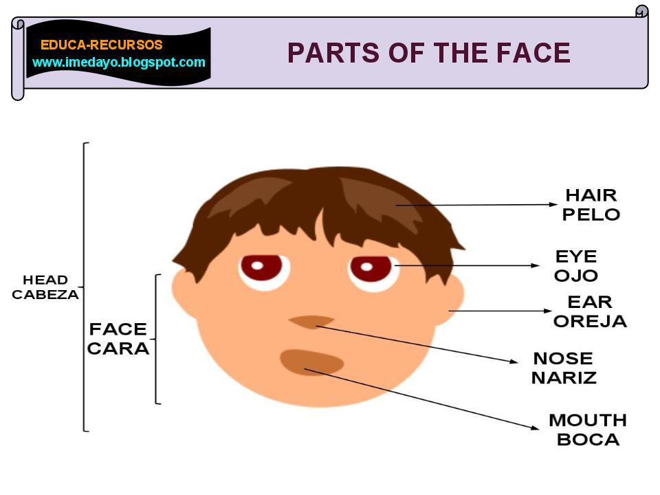 Como se escriben las partes de la cara en inglés - Imagui