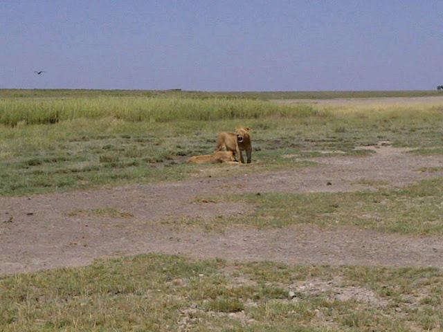 Manyara National Park