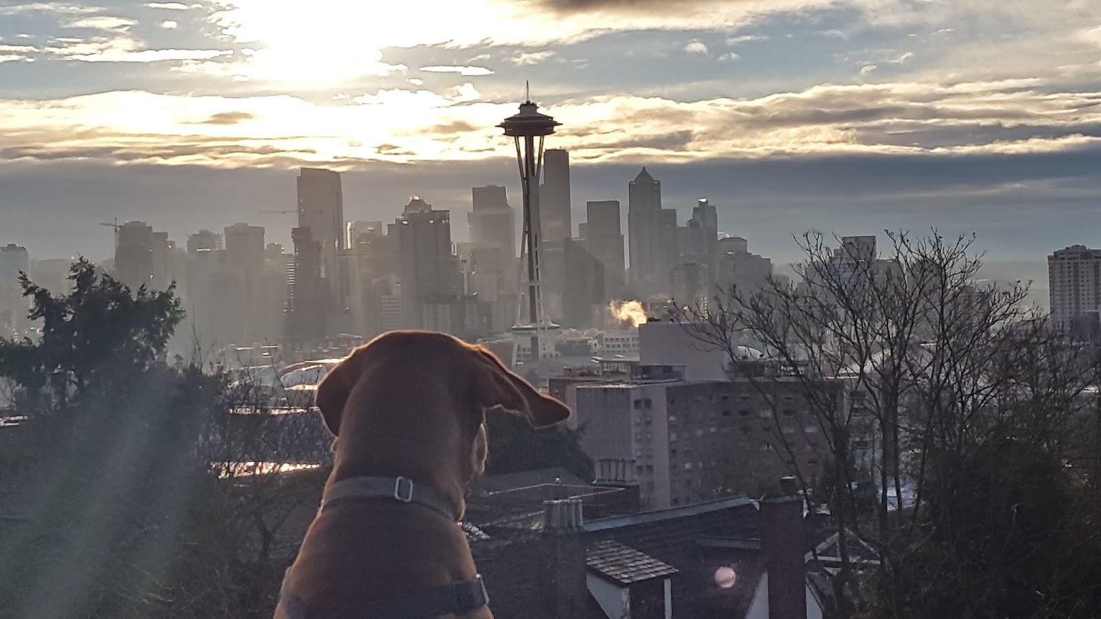 dog seattle sunset