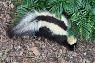 ملف كامل عن اجمل واروع الصور للحيوانات  المفترسة   حيوانات الغابة  232824293_615e974e09