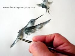 Draw A Hummingbird