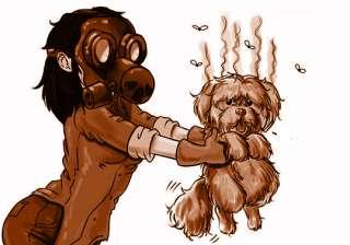 Togliere ed eliminare odore e puzza dal pelo del cane