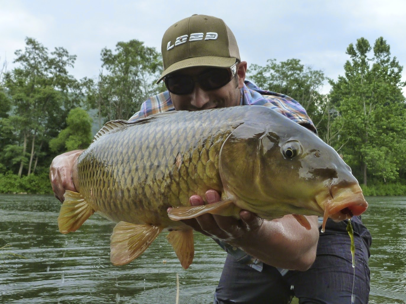 This river is wild thoughts on fly fishing for carp for Fly fishing carp