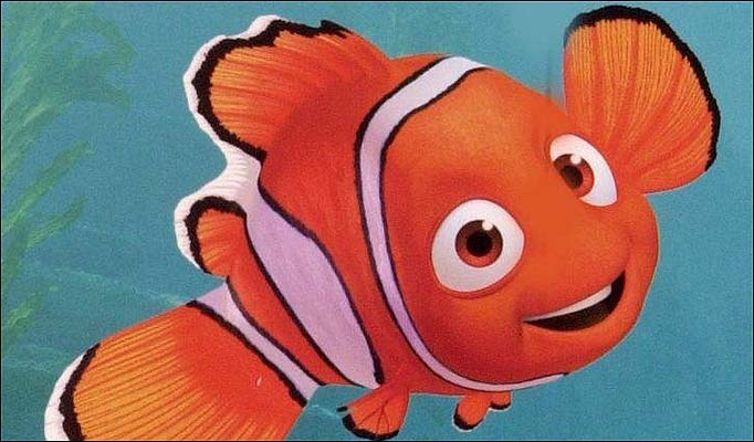 A place for free hd wallpapers desktop wallpapers nemo for Clown fish nemo
