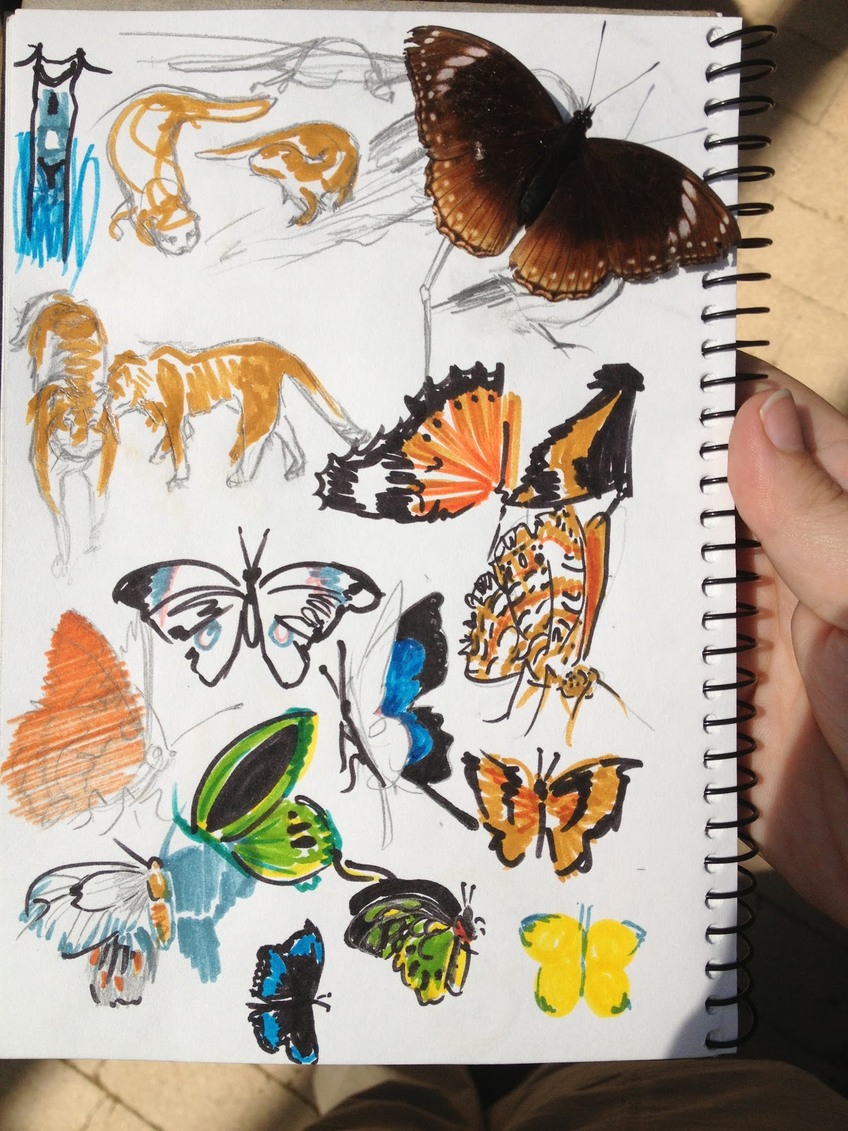 trip to the melbourne zoo to learn how to draw animals alex e clark