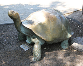 Tortoise Sculpture