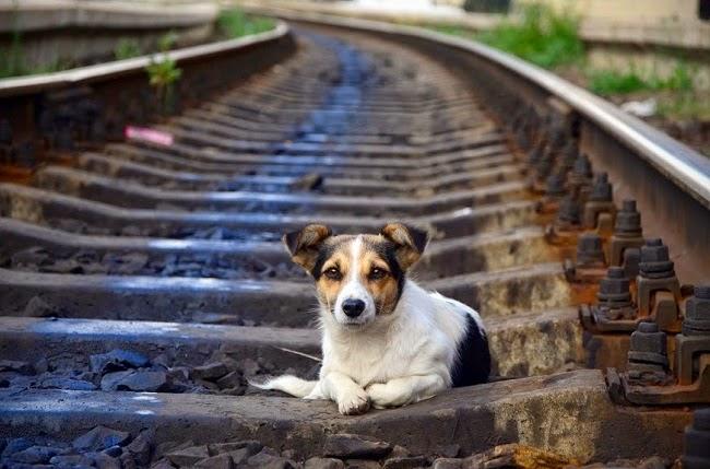 Porzucanie psów w trakcie wakacji