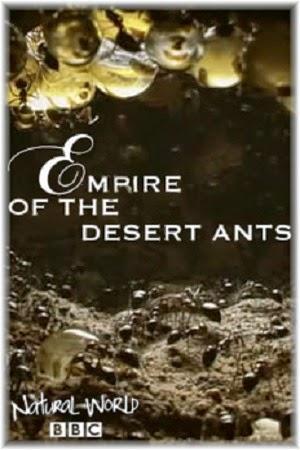 Thế Giới Tự Nhiên : Đế Chế Của Loài Kiến Sa Mạc - Bbc Natural World : Empire Of The Desert Ants