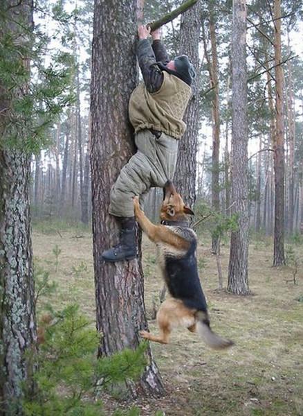 dogs pics