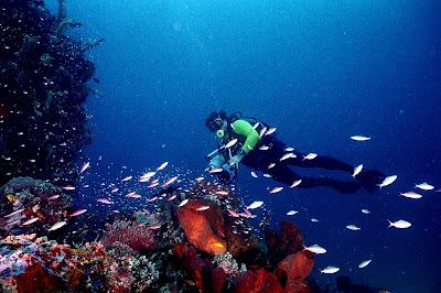 Pemandangan Bawah Laut 2013