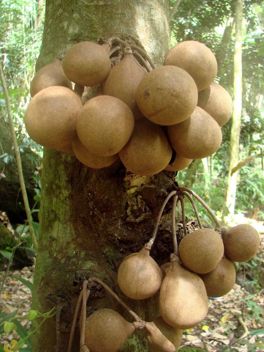 Algumas plantas raras natureza bela for Unusual small trees
