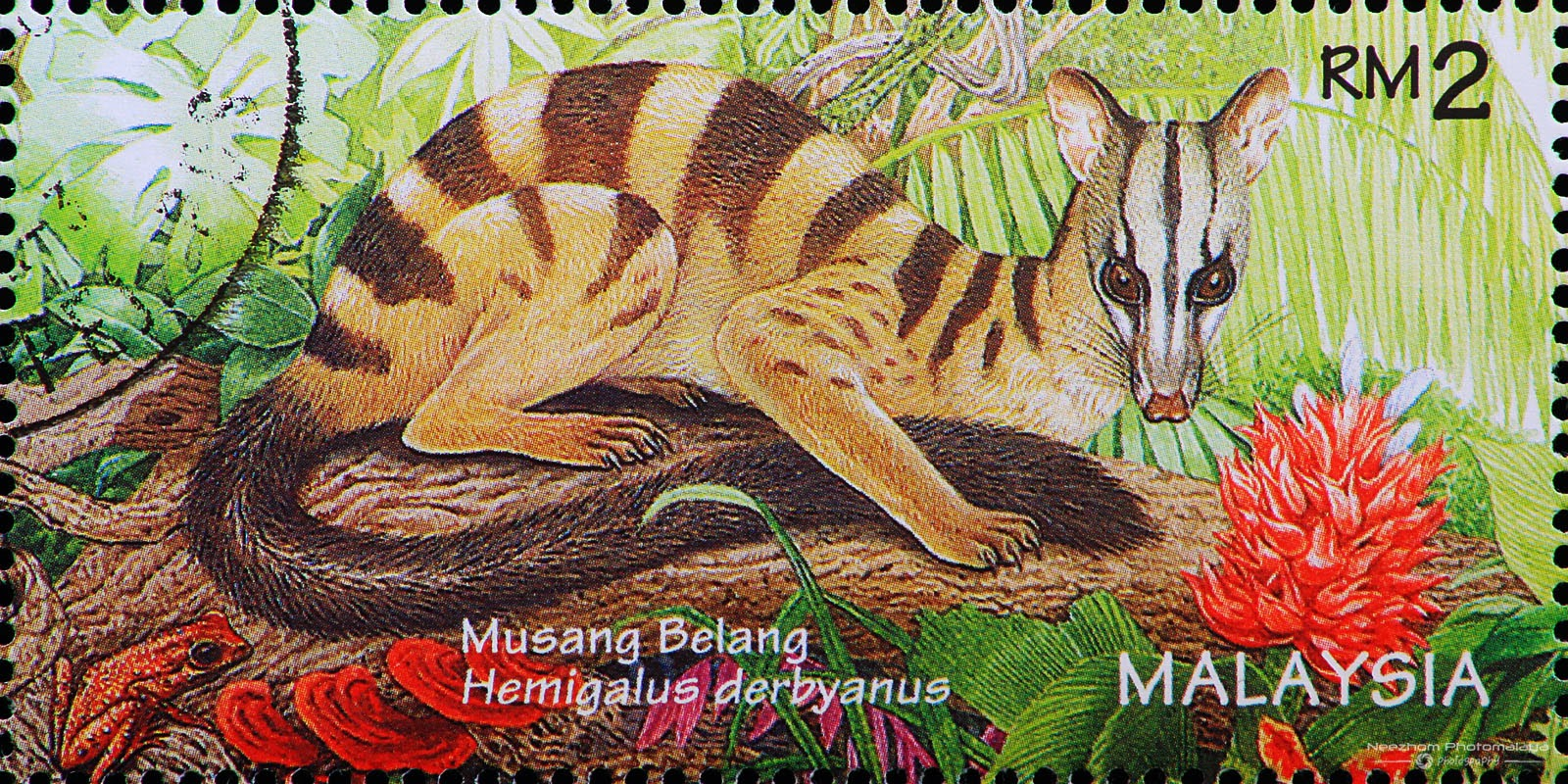 Malaysia 1996 Wildlife stamps - Banded Palm Civet / Musang Belang (Hemigalus derbyanus) RM2