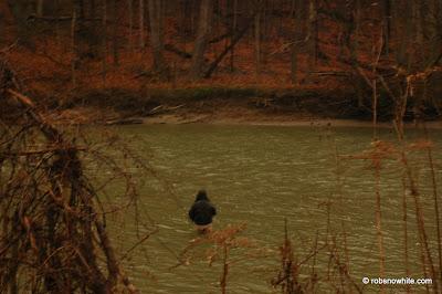 chargrin river steelhead fisherman
