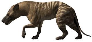 La Bestia de Gevaudan Hyaenodon_pic
