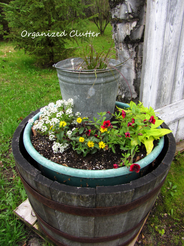 Whiskey Barrels & Galvanized Buckets for Height www.organizedclutterqueen.blogspot.com