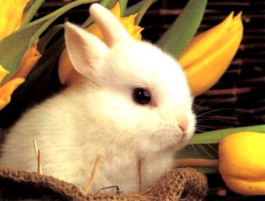 Free Desktop Backgrounds Easter Bunnies Zoom Wallpapers