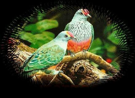 Le mie poesie un amore antico - Affacciati alla finestra amore mio ...